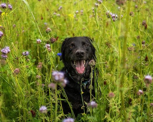 Urlaub Mit Hund Vor Ort Richtig Handeln